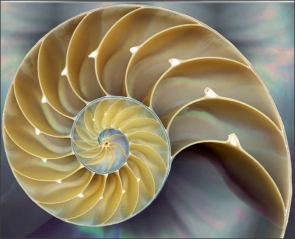 Fibonacci in Nature # 2